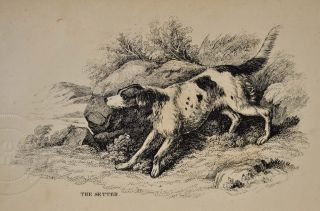 THE DOG AND THE SPORTSMAN. Embracing the Uses, Breeding, Training, Diseases, etc., etc., of Dogs, and an Account of the Different Kinds of Game, with Their Habits. Also, Hints to Shooters, with Various Useful Recipes, etc., etc.