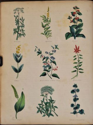 THE COMPLETE HERBAL, To Which Is Added, Upwards of One Hundred Additional Herbs, with a Display of Their Medicinal and Occult Qualities Physically Applied to the Cure of All Disorders Incident to Mankind.
